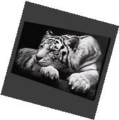 Black and White Tiger Wall Art Painting Canvas Picture