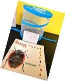 Carolina Amazing Bugs Live Insect Bug Science Kit Ladybug