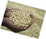 5 lbs Burundi A Nyarunazi Bourbon UnRoasted/Green Coffee