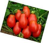 Davids Garden Seeds Tomato Paste Roma VF Virginia Select Red