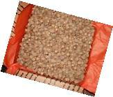 Large Flat Rate Box of White Oak Acorn Caps