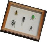 Hand-Painted Metal Insects, Bug Collection, Entomology,