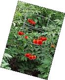 """3 x Heavy Duty Folding Tomato Cage and Plant Support, 24"""" X"""