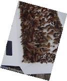 Roach Insect Traps Spider Traps SilverfishTraps Scorpion