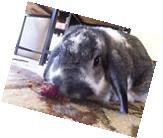 Rosebuds & Petal 1 oz Bunny Rabbit Chinchilla Food Treat