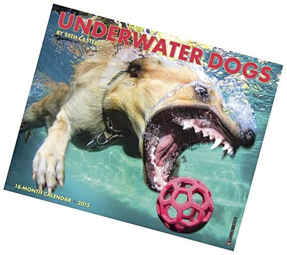 2015 Underwater Dogs Wall Calendar Willow Creek Press {jg