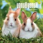 2017 Honey Bunny Mini WALL Calendar