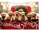 DOG LOVERS! GOLDEN RETRIEVER PUPPIES IN RED TRUCK AVANTI