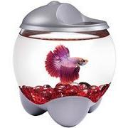 Tetra Gallon Betta Bubble Kit with Changing Color LED Hood