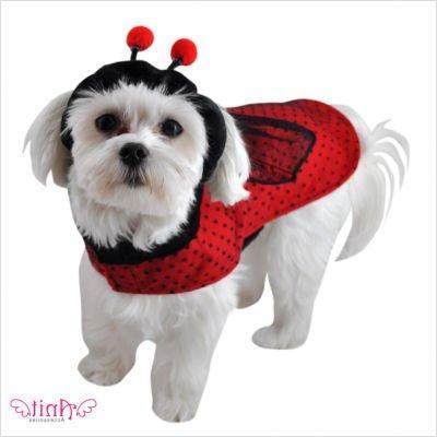 Ladybug Dog Costume, 12-Inch