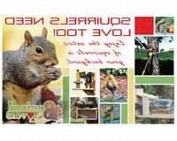 Songbird Essentials SEPOSTSQUIRRELS Squirrels Need Love Too